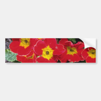 Red Scarlet primulas flowers Bumper Stickers