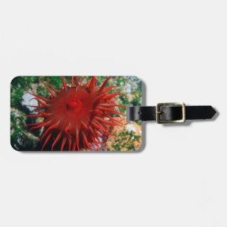 Red Sea Anemone In Pool Bag Tag