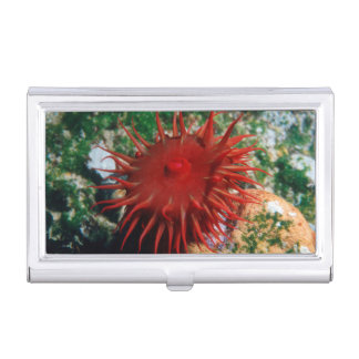 Red Sea Anemone In Pool Business Card Holder