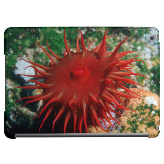 Red Sea Anemone In Pool iPad Air Cover