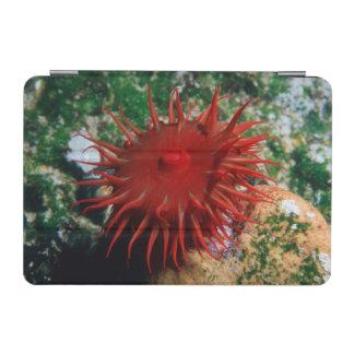Red Sea Anemone In Pool iPad Mini Cover