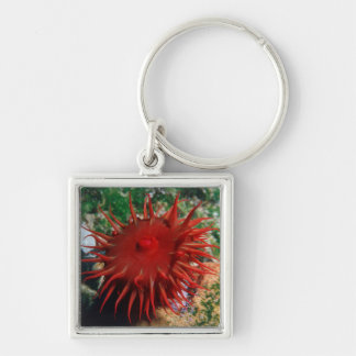 Red Sea Anemone In Pool Silver-Colored Square Key Ring