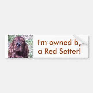 Red Setter Bumper Sticker