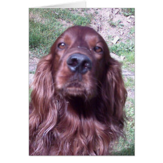 Red setter card