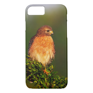 Red-shouldered Hawk (Buteo lineatus) in early iPhone 8/7 Case