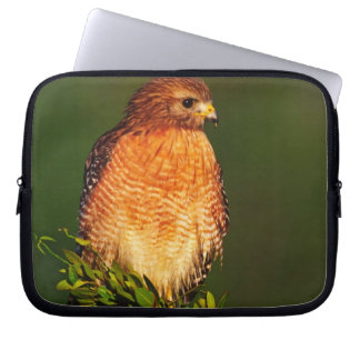 Red-shouldered Hawk (Buteo lineatus) in early Laptop Sleeve
