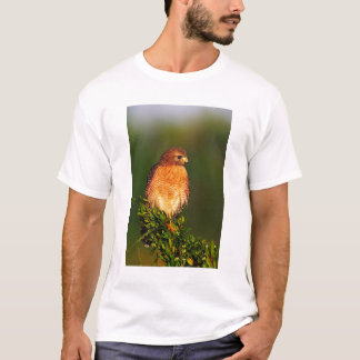 Red-shouldered Hawk (Buteo lineatus) in early T-Shirt