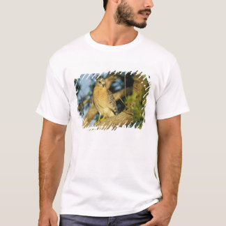 red-shouldered hawk, Buteo lineatus, sits on T-Shirt