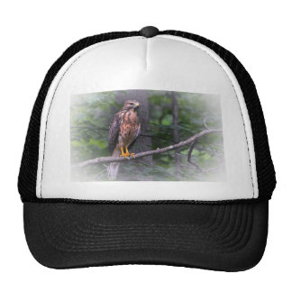 Red Shouldered Hawk Cap