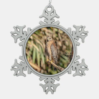 Red Shouldered Hawk in a tree Pewter Snowflake Decoration