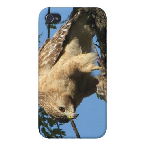 Red Shouldered Hawk with Prey iPhone 4 Case