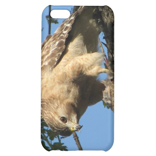 Red Shouldered Hawk with Prey iPhone 5C Cases