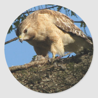 Red Shouldered Hawk with Prey Stickers