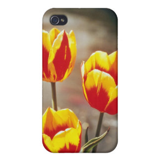 Red Single early tulips, Keizerschroon flowers iPhone 4 Cover