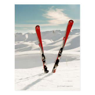 Red Skis Postcard