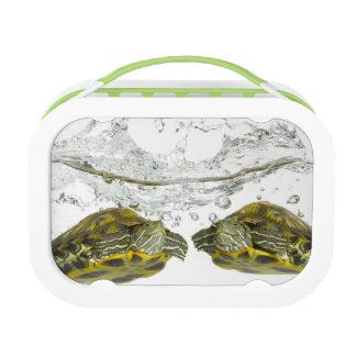 Red slider turtles lunch box