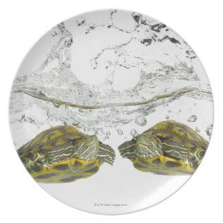 Red slider turtles plate