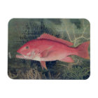 Red Snapper, from 'Game Fishes of the United State Magnet