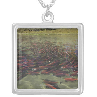 Red Sockeye salmon milling in calm eddy and Silver Plated Necklace
