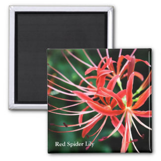 Red Spider Lily Square Refrigerator Magnet