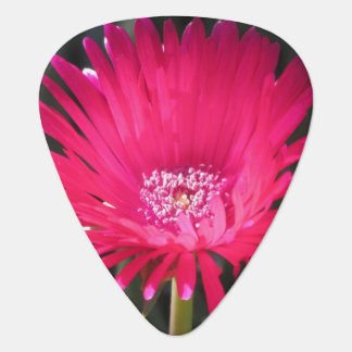 Red Spike Ice Plant Bloom Guitar Pick
