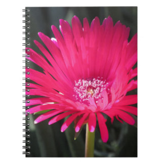 Red Spike Ice Plant Bloom Note Books