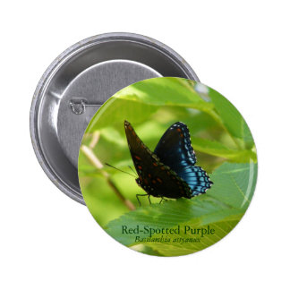 Red-Spotted Purple Butterfly on an Elm Leaf 6 Cm Round Badge