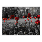 Red Spring Tulips Postcard