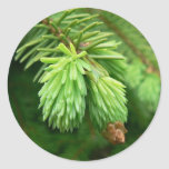 Red Spruce Sprouts Round Stickers