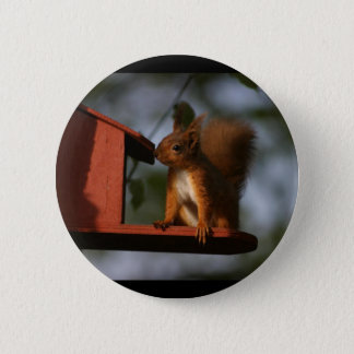 Red squirrel 6 cm round badge