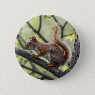 Red Squirrel 6 Cm Round Badge