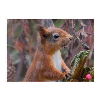 Red Squirrel Acrylic Wall Art