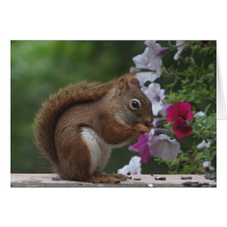 Red Squirrel and Petunias Card