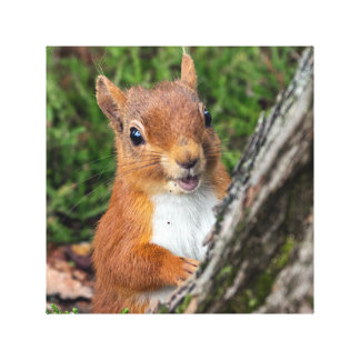 red squirrel animal print gallery wrapped canvas