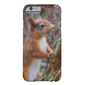 Red Squirrel Barely There iPhone 6 Case