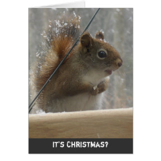 Red Squirrel Christmas Greeting Card