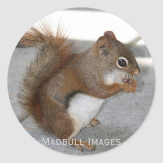 Red Squirrel Classic Round Sticker