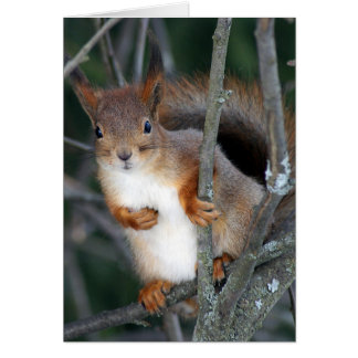 Red Squirrel Closeup Card