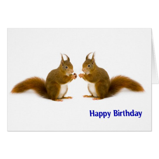 Red squirrel image for Birthday greeting card