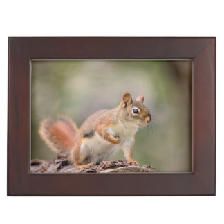 Red Squirrel Keepsake Box