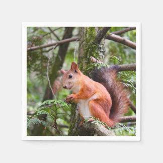 Red Squirrel Napkins Paper Napkin