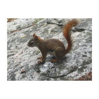 Red Squirrel on a Rock Gallery Wrapped Canvas