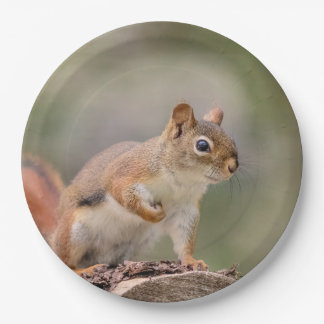 Red Squirrel Paper Plate