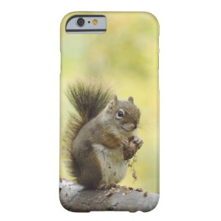 Red Squirrel, Pine Squirrel, Tamiasciurus Barely There iPhone 6 Case