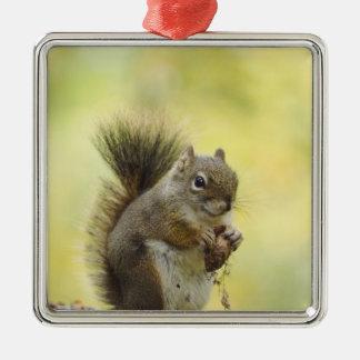 Red Squirrel, Pine Squirrel, Tamiasciurus Christmas Ornament