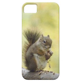 Red Squirrel, Pine Squirrel, Tamiasciurus iPhone 5 Cover