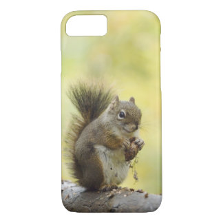 Red Squirrel, Pine Squirrel, Tamiasciurus iPhone 8/7 Case