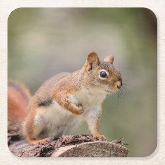 Red Squirrel Square Paper Coaster