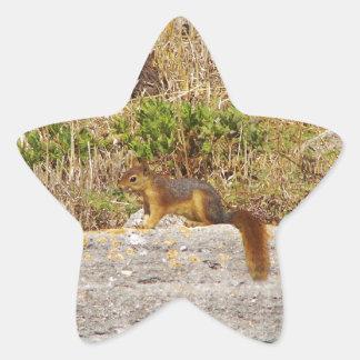 Red Squirrel Star Sticker