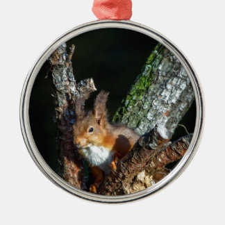 Red Squirrel Up A Tree Christmas Ornament